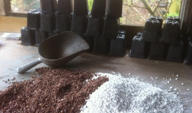 Grit and Perlite; A 50-50 mix for topping.