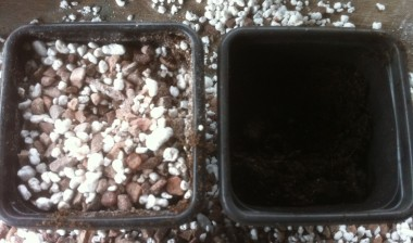 Pot (left) prepared and ready for sowing of small primula seed.