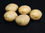 Harmony; A potato so vile even nematodes slither away.