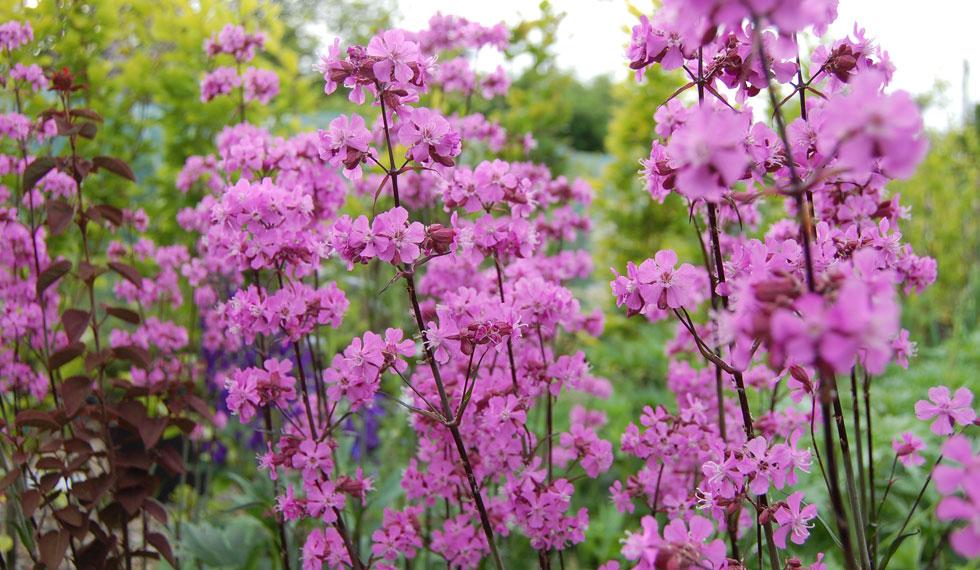 The Best Nursery Garden in the North