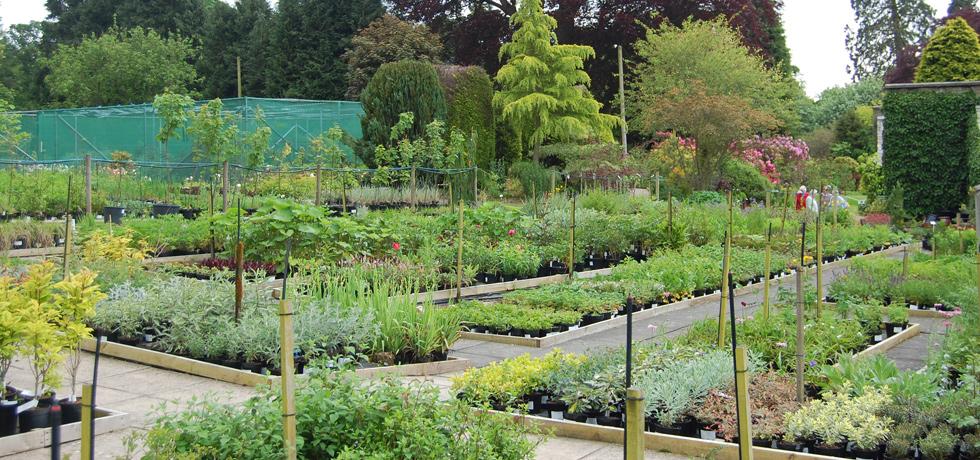 Four Hundred years of Plantsmen