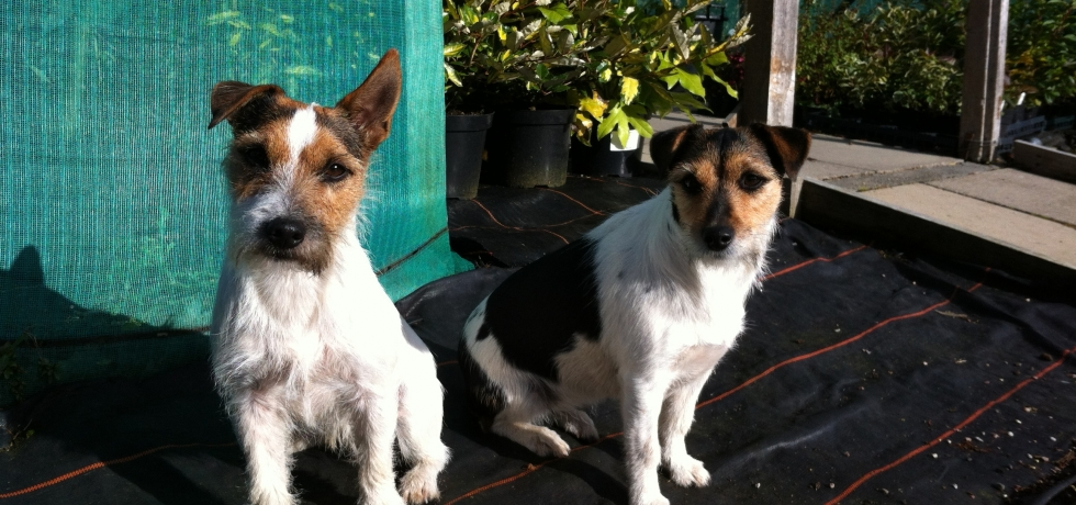 Finn & Tucker...Organic Pest Control