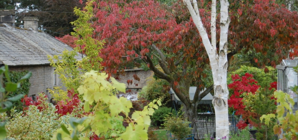 Autumn overlooking the shop