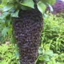 Bee Keebab